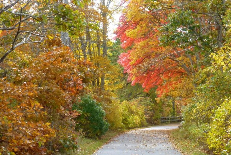 Empty paved trail going through a dense wooded area full of fall colors of green, orange and yellow