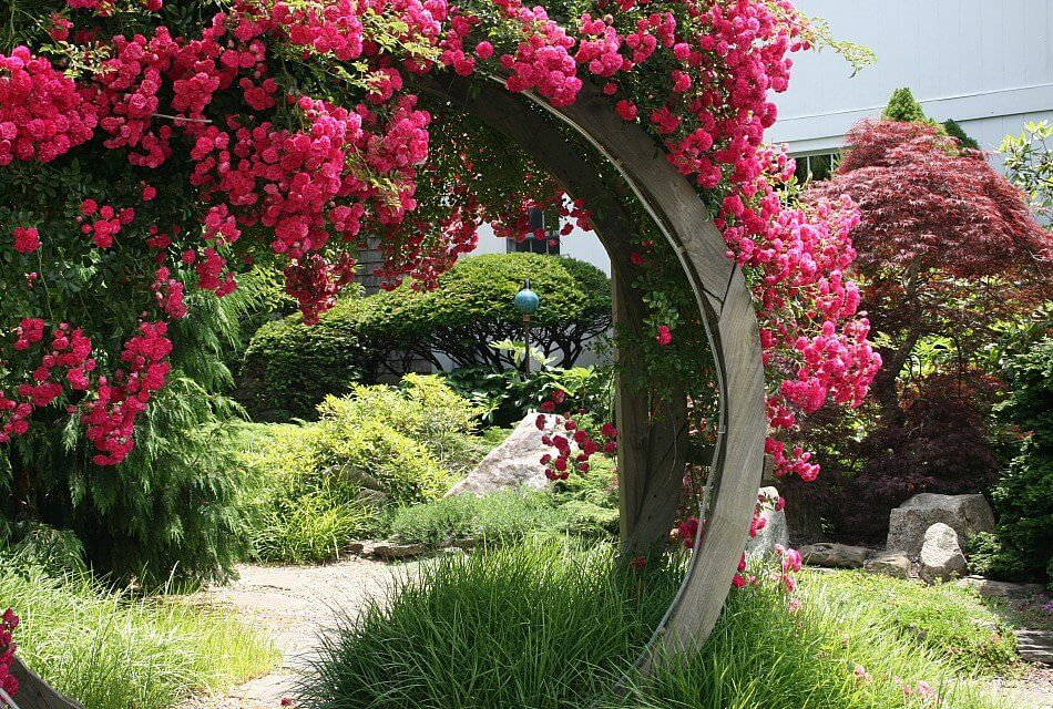 Large circular wooden arch covered with bright pink flowers over a stone path near an abundance of green plants and shrubs